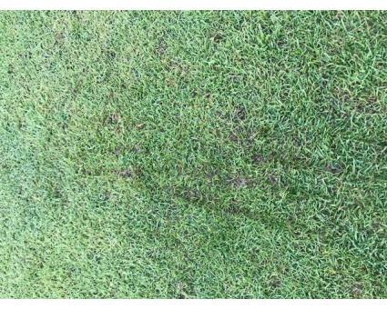 Voorkom schade aan de golfbaan door golfschoenen
